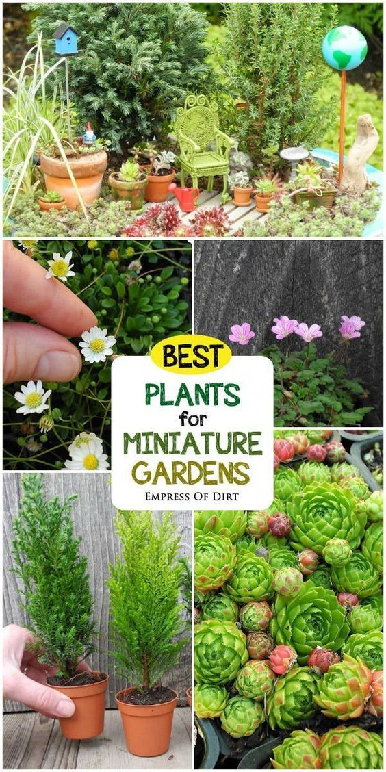 10 Great Decorate With Miniature For Cute Gardens 15